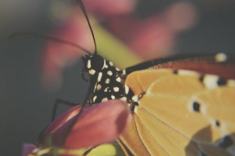Closeup Macro