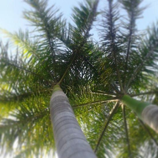 Bajo la palmera Descanso Finde Recargando Energía