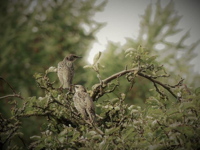 Birds🐦⛅ Bird