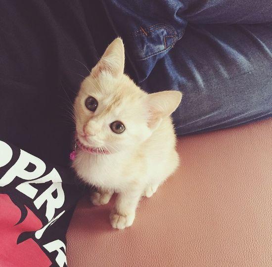 猫 Cat 愛猫 Love きなこ Kinako Pet