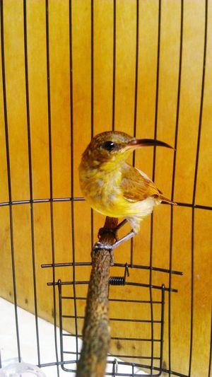 Teenage Kolibri first eyeem photo Bird Bird Watching