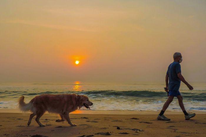 Morning Walking Dog Doglovers Beach Sunrise India Chennai Dogwalking Scenery
