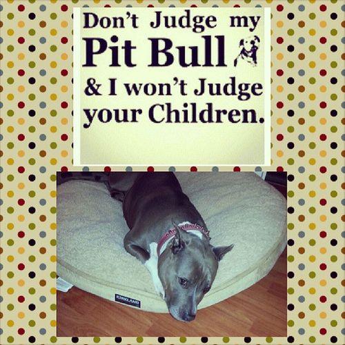 Word @roburbina15 Mybaby Princess Pitbullsarebeautiful Manandwomansbestfriend