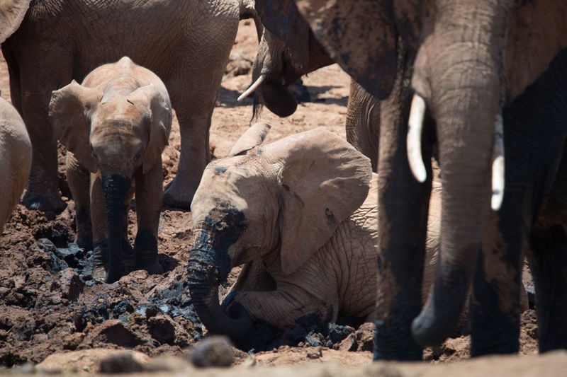Africa Animal Baby Day Elefant Mammal Nature No People Outdoor Outdoors Remote Wildlife Wildlife & Nature