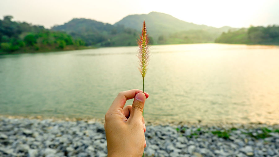 Flower holding by hands with bleary nature background One Person Human Hand Holding Hand Nature Focus On Foreground Human Body Part Plant Beauty In Nature Day Outdoors Finger Water Real People Lake Personal Perspective Leisure Activity Tranquility Lifestyles Unrecognizable Person Flower Grass Flowers Grass Abstract