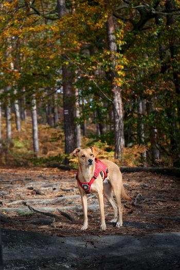 Portrait of dog in forest