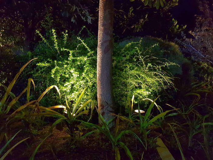 Lighting. Park