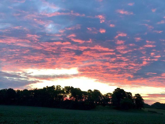 Sunrise 7/23/18 Sunrise Sky Cloud - Sky Tree Plant Beauty In Nature Tranquility