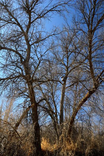 Bird house among the branches Day Outdoors Winter Shadow Tree Branch Clear Sky Treetop Bare Tree Single Tree