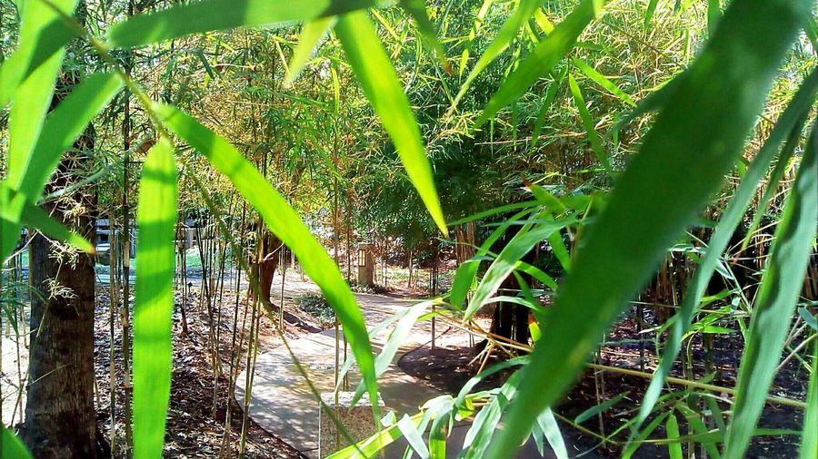 Green plants growing on tree