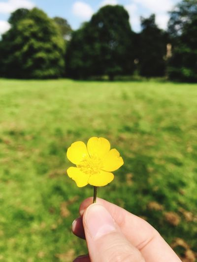 A pretty little flower in a field Human Hand Hand Plant Human Body Part Holding Finger Flowering Plant Yellow Nature Close-up Beauty In Nature Unrecognizable Person Human Finger Flower