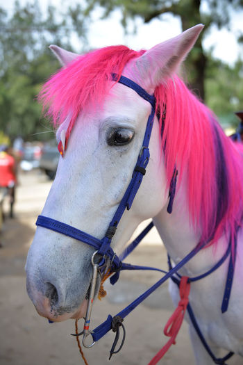 Close-up of horse with pink hair