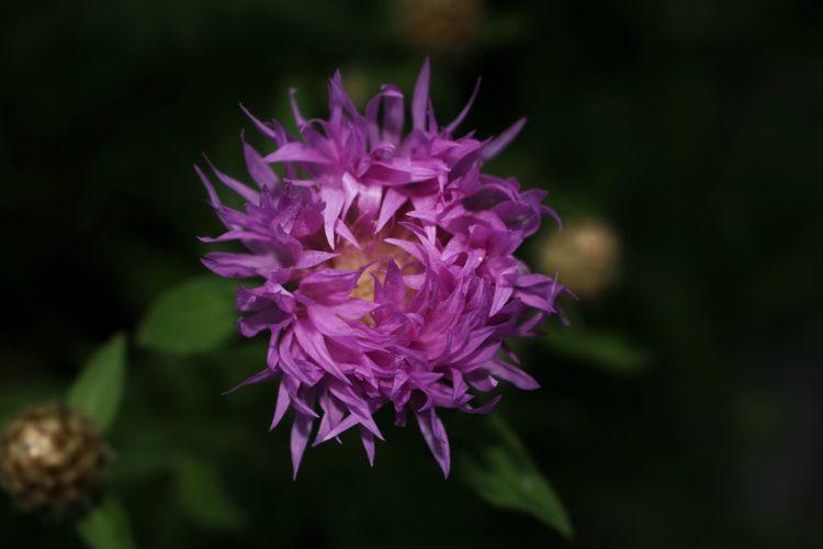 Flower Purple