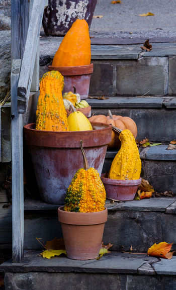 pumpkins and gourds are arranged in clay pots for a colorful fall display Autumn Colors Clay Pots In A Garden Fall Colors Halloween Orange Pumpkins Stone Steps Autumn Displa Day Fall Gourds & Pumpkins Leaves No People Outdoors Outdoors Photograpghy  Yellow