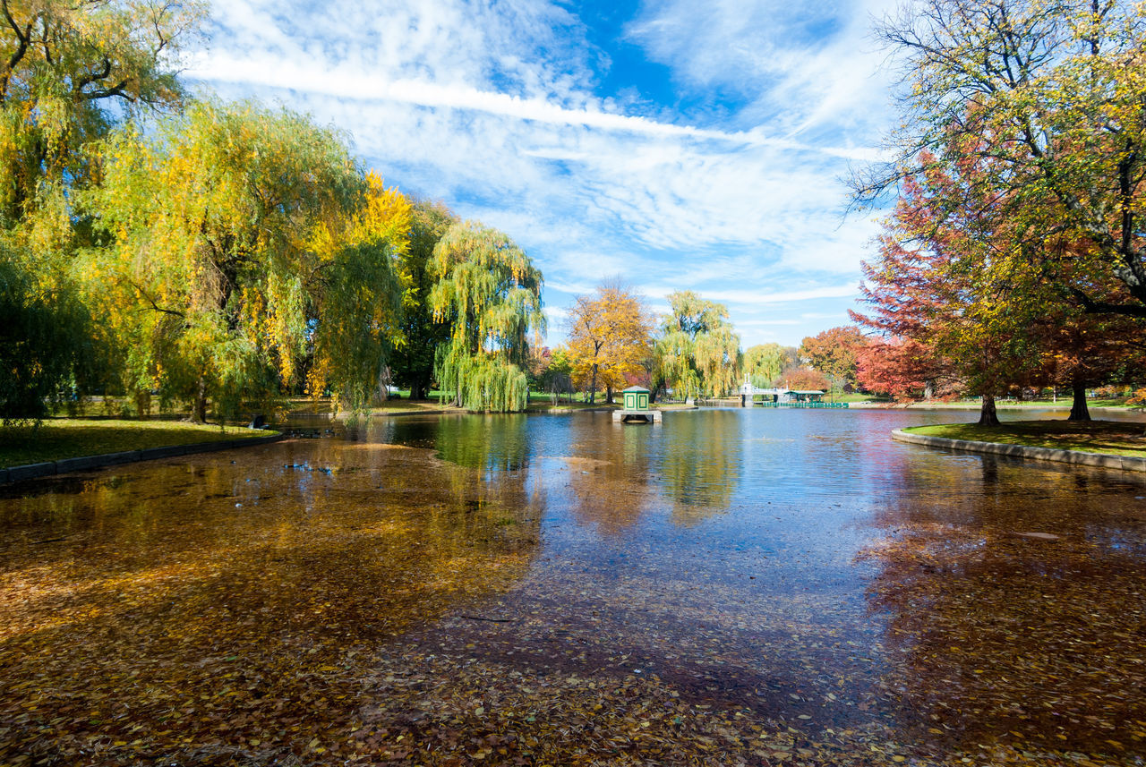 water, tree, plant, reflection, lake, nature, sky, beauty in nature, tranquility, day, autumn, no people, tranquil scene, scenics - nature, cloud - sky, park, outdoors, growth, change