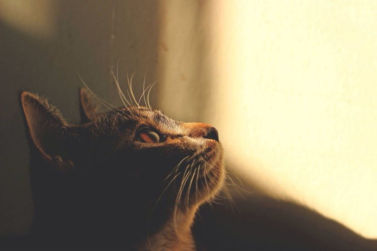 One Animal Animal Themes Domestic Cat Mammal Feline Whisker No People Domestic Animals Close-up Pets Indoors  Happy Light And Shadow Light Hope Hopes And Dreams