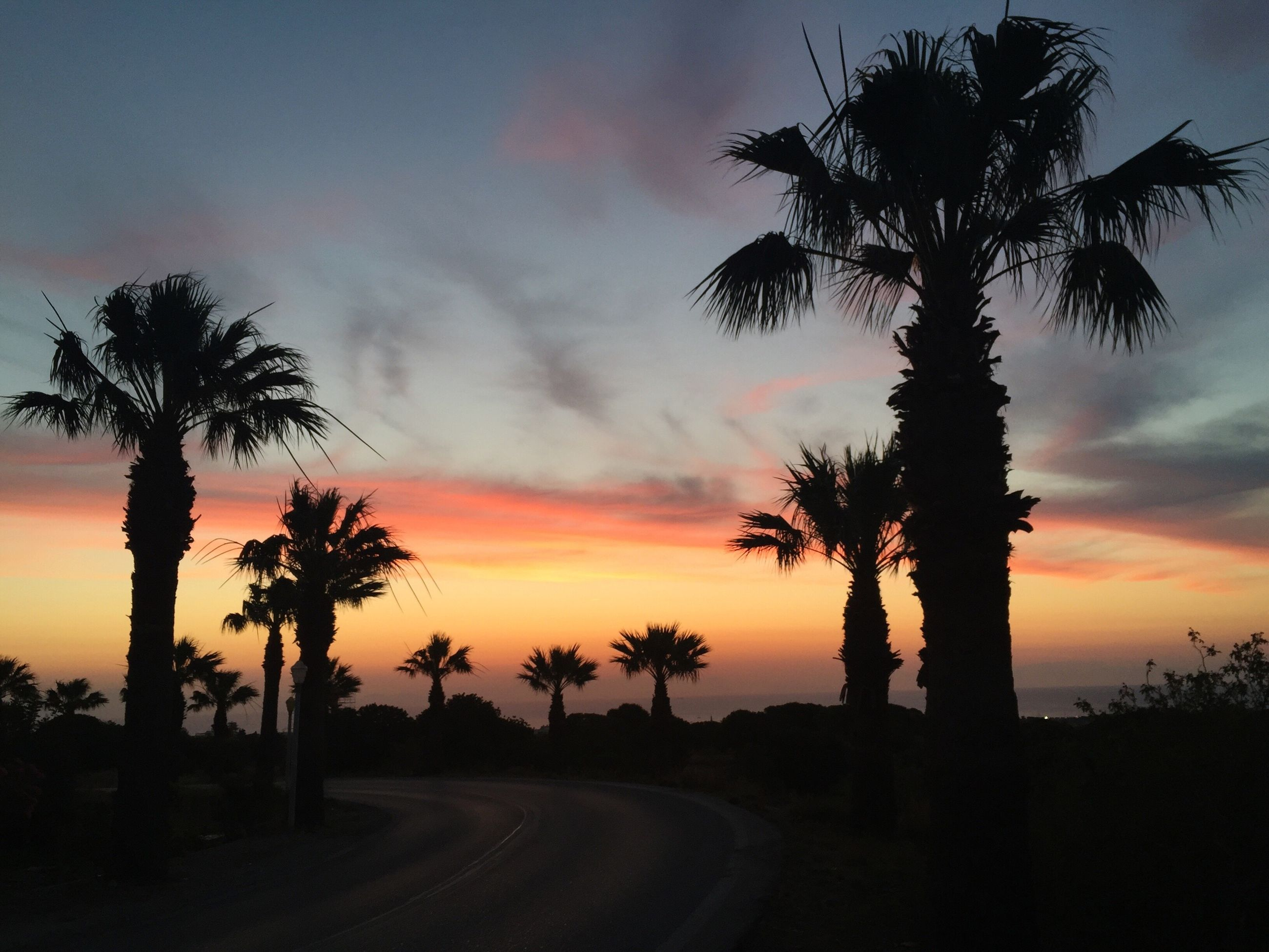 tree, sunset, palm tree, silhouette, sky, no people, scenics, tranquil scene, beauty in nature, cloud - sky, sea, tranquility, nature, outdoors, day