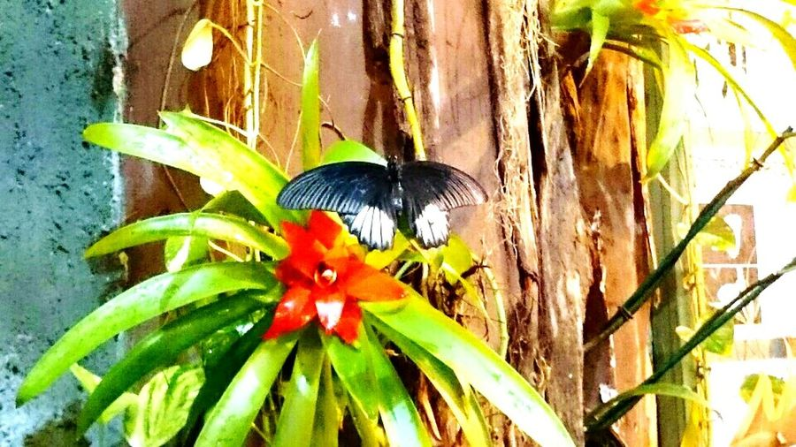 Animals Butterfly ❤ Zoo