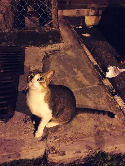 Cat Lonely Cat