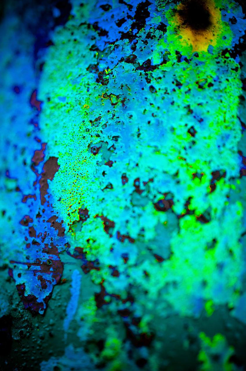 FULL FRAME SHOT OF BLUE GREEN PLANT