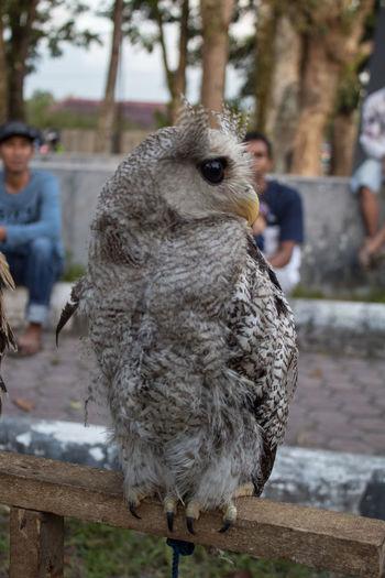 owl Focus On