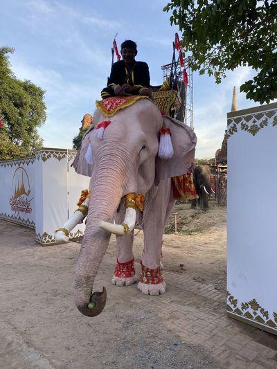 Man riding elephant on street against sky