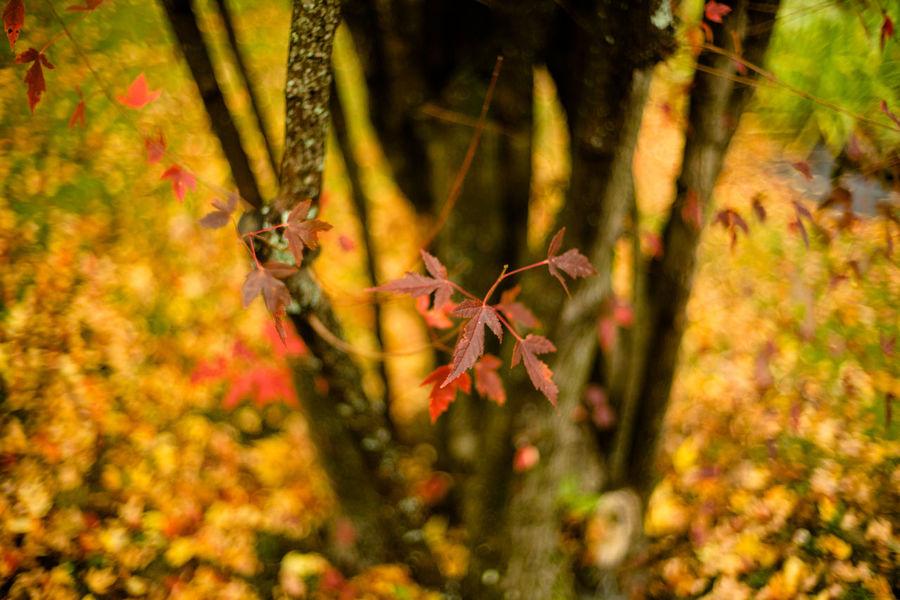 Autumn Colorful Fall Fall Colors Leaves