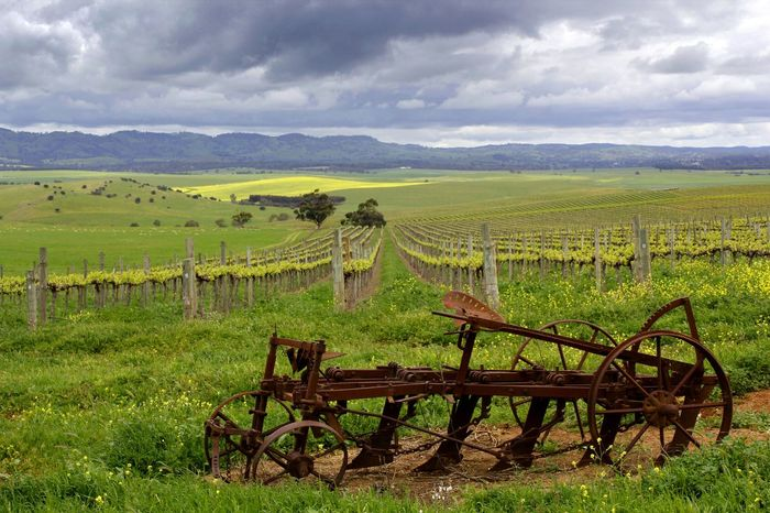 Springtime storms across the vineyard in the Barossa Valley South Australia Agriculture Australia Australian Landscape Barossa Valley Beauty In Nature Cloud - Sky Crop  Cultivated Land Day Farm Field Green Color Growth Landscape Nature No People Outdoors Rural Scene Scenics Sky Storm Clouds Tranquil Scene Tranquility Travel Vineyard