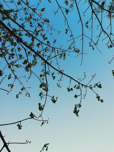 Spring Bird Tree Branch Clear Sky Flying Blue Flock Of Birds Sky Animal Themes