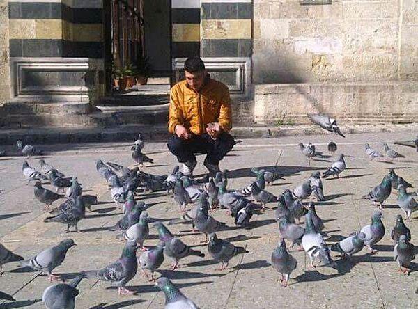 Kuşlardan Yalnızca Güvercini Severim.. Guvercin