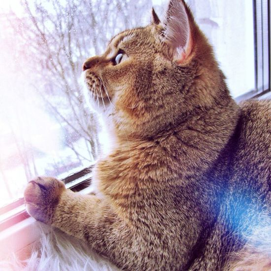 CatLove Domestic Cat One Animal Domestic Animals Whisker Pets