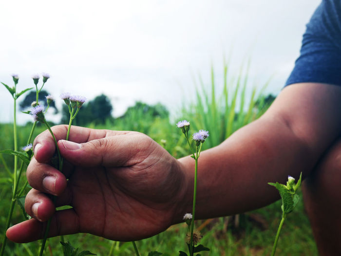 Grass Beauty In Nature Blooming Body Part Care Close-up Field Finger Flora Flower Focus On Foreground Grass Area Growth Hand Holding Human Body Part Human Hand Land Leaf Lifestyles Nature Outdoors People Plant Real People