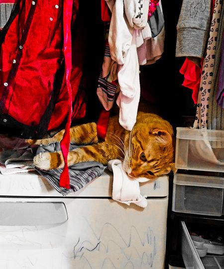 O hai! Dis mai kloset. Pets Animal Themes Mammal Domestic Animals One Animal Domestic Cat Indoors  Day No People Closet Catsofinstagram Eye4photography  Look! Cats Of EyeEm Samsung Galaxy S7 Edge Relaxation
