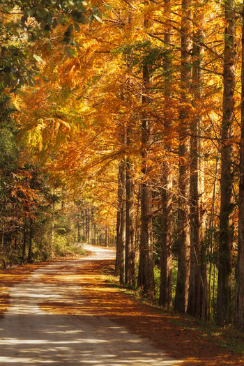Autumn road Tree Autumn Plant Forest Change Land Beauty In Nature Nature Road Orange Color No People