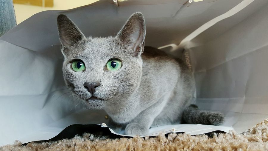 Close-Up Of Cat In Paper Bag