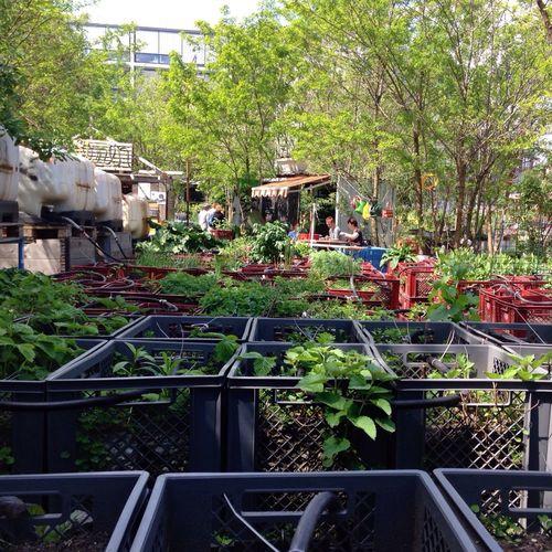 Urban Gardening Garden Green Thumb