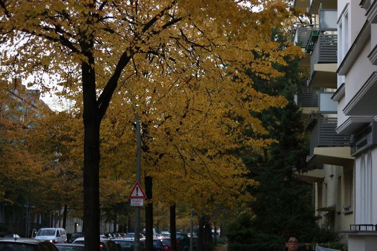Berlin Tree