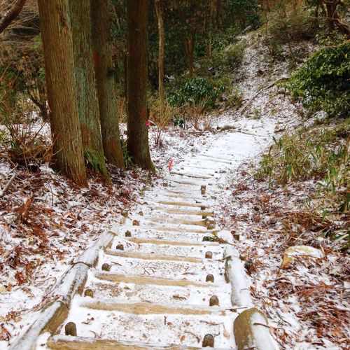 Picnic Nature Trailrunning Mountains Japan Tree #nature #green Snow