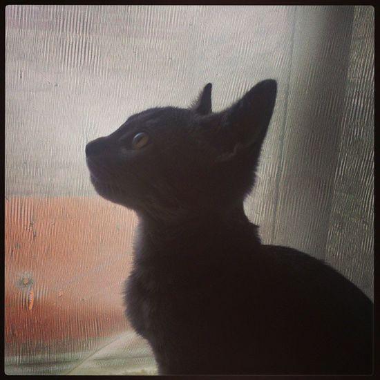 Duquesa Gatita  Bebe Hermosa cat