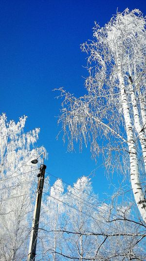 Winter Russian Nature Nature Tree