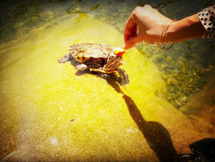Today for lunch, and we went to the park and fed turtles.