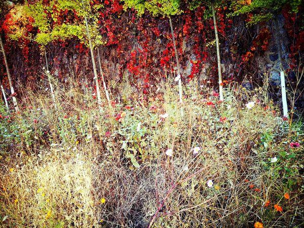 First Eyeem Photo Hello World Enjoying Life Autumn Colors My School~~ EyeEm Nature Lover Happy :)