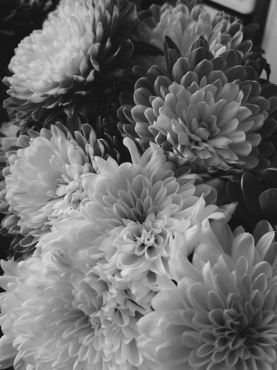 ⚫⚪ Flower Petal