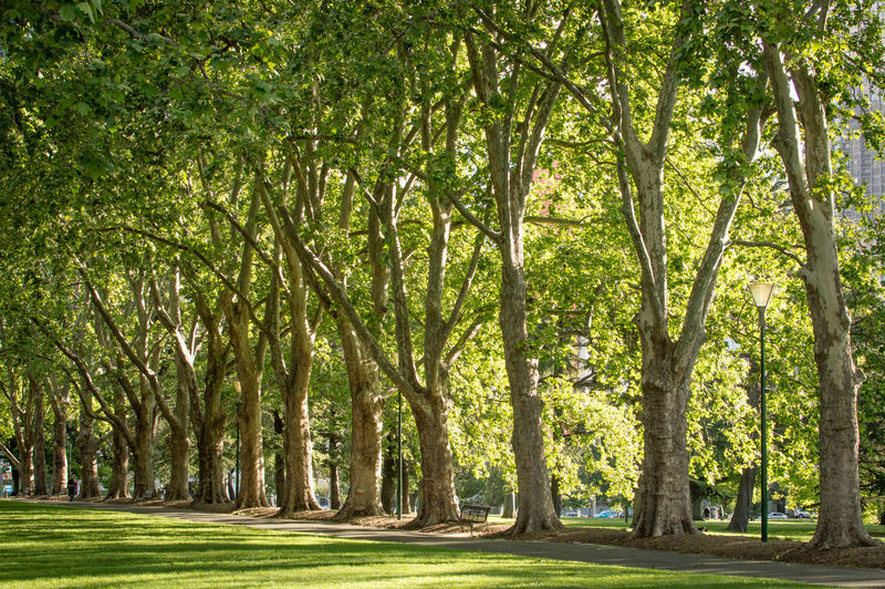 Green LINE Travel Beauty In Nature Day Environment Foliage Forest Green Color Growth Land Lush Foliage Nature No People Outdoors Park Plant Scenics - Nature Tranquil Scene Tranquility Tree Tree Trunk Treelined Trunk WoodLand