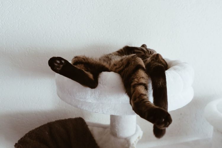 Cat Resting On Scratching Post Against Wall At Home
