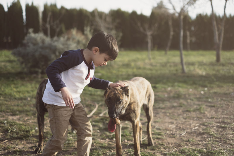 Boy playing with dogs in forest