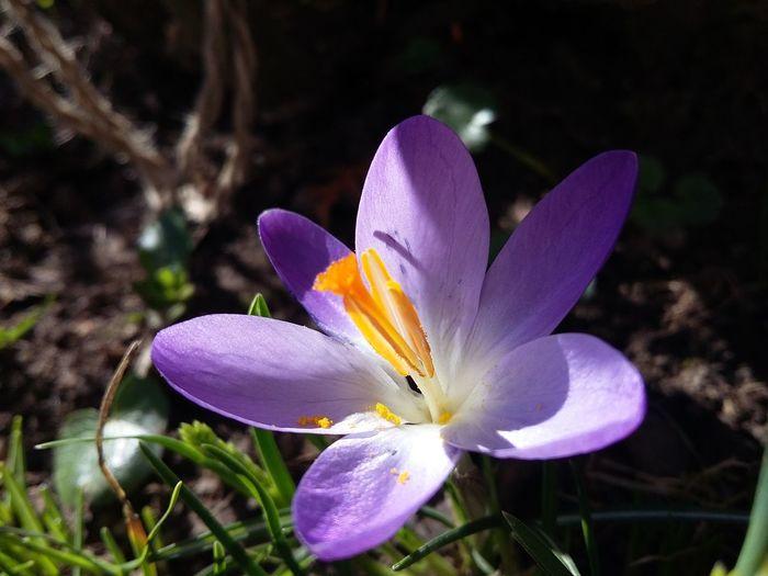 Hello World Mygarden Beautifulgarden Spring2016 Relaxing Divine Light