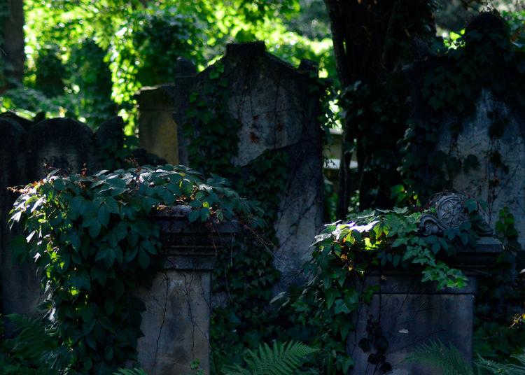 Cemetery Cmentarz Cmentarzżydowski Grave Ivy Old Overgrown Tomb Tranquility