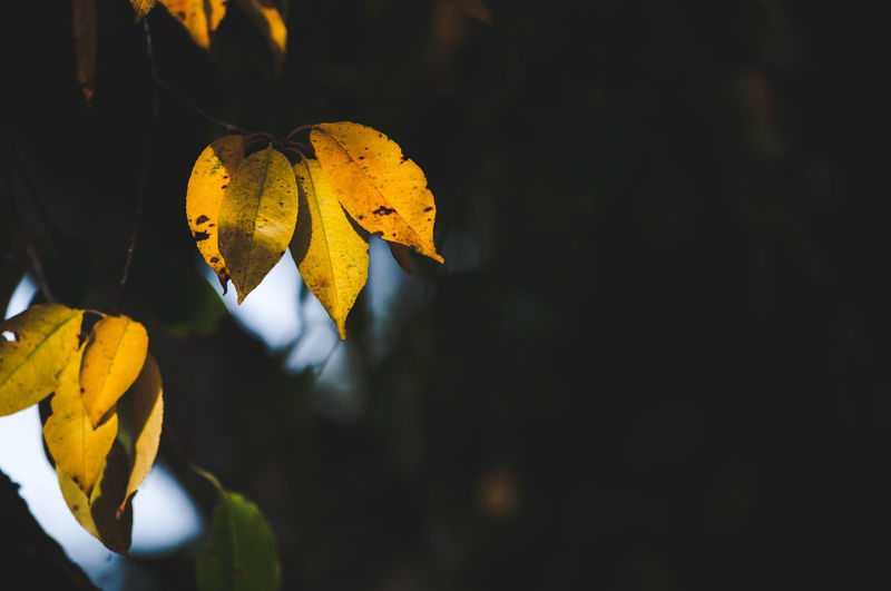 Plant Part Leaf Plant Yellow Nature Close-up Growth Beauty In Nature Vulnerability  No People Focus On Foreground Autumn Fragility Change Freshness Copy Space Outdoors Plant Stem Leaves Flower Flower Head