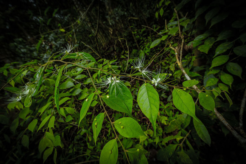 WideFlowers Green Nam Cát Tiên National Park Beauty In Nature Close-up Day Field Forest Freshness Green Color Growth High Angle View Land Leaf Leaves Nature No People Outdoors Plant Plant Part Selective Focus Tranquility Vulnerability  Wideflower EyeEmNewHere